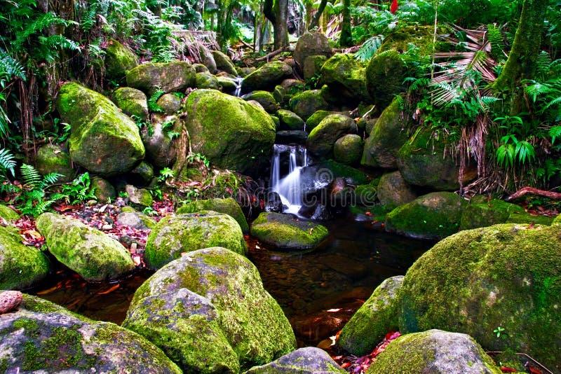 джунгли Гавайских островов заводи стоковые фото