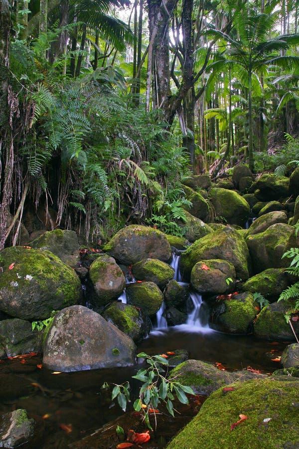 джунгли Гавайских островов заводи стоковые изображения