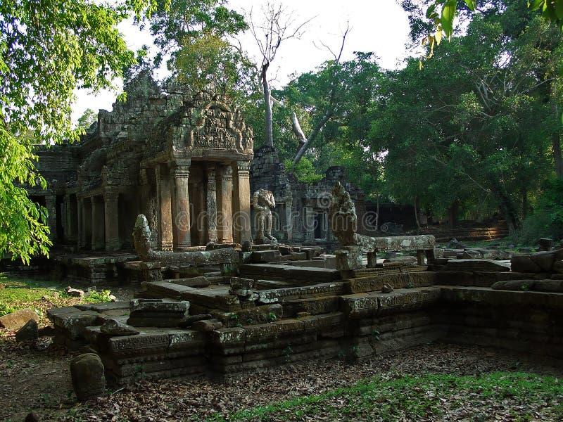 джунгли Камбоджи стоковое изображение rf