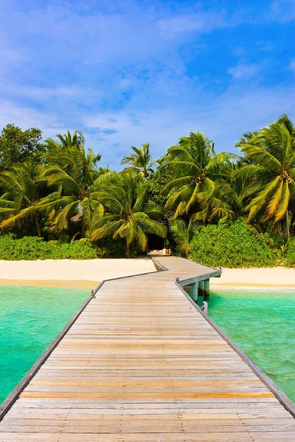 джунгли молы пляжа стоковые изображения