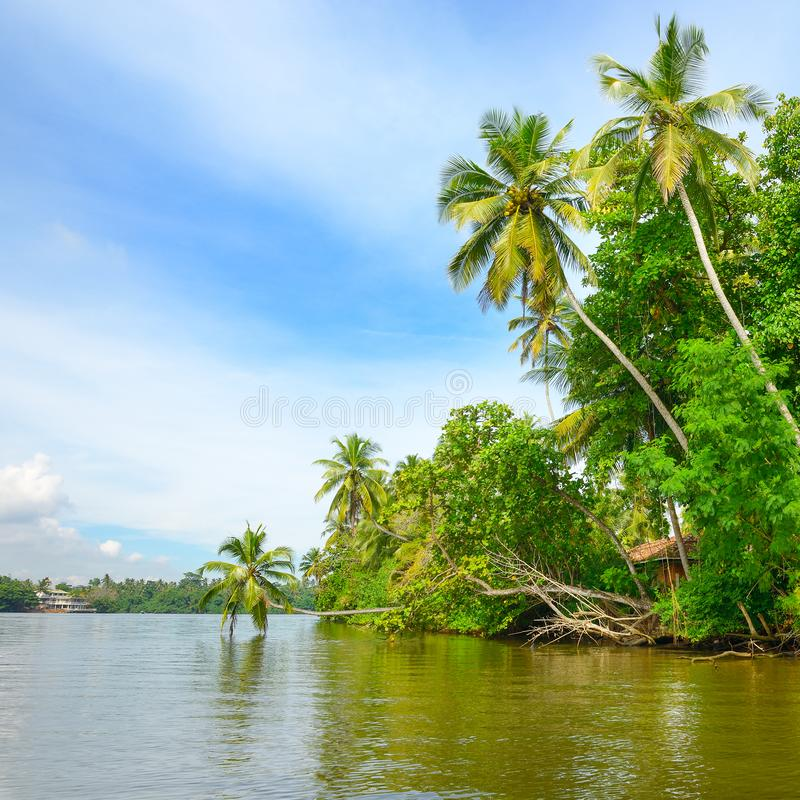 Джунгли на озере берега стоковая фотография