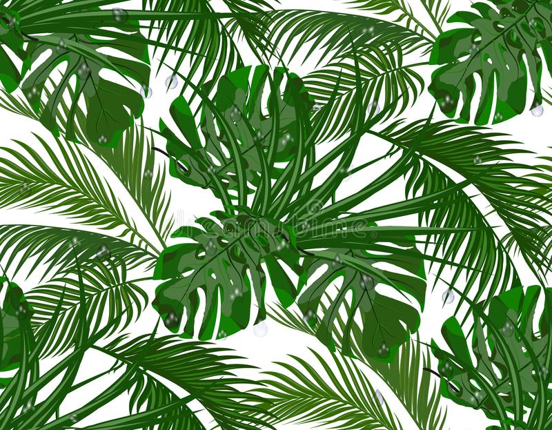 Джунгли Сочный зеленый цвет листья тропических пальм, monstera, столетников безшовно белизна изолированная предпосылкой бесплатная иллюстрация