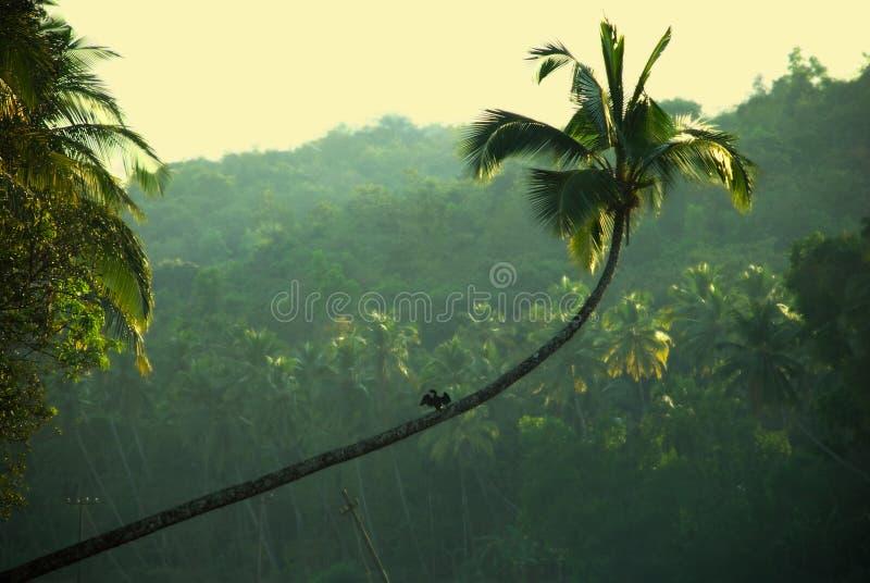 джунгли anhinga стоковое фото