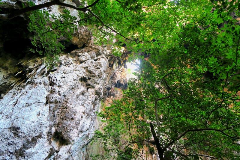 Джунгли в пещере Phraya Nakhon стоковое фото rf