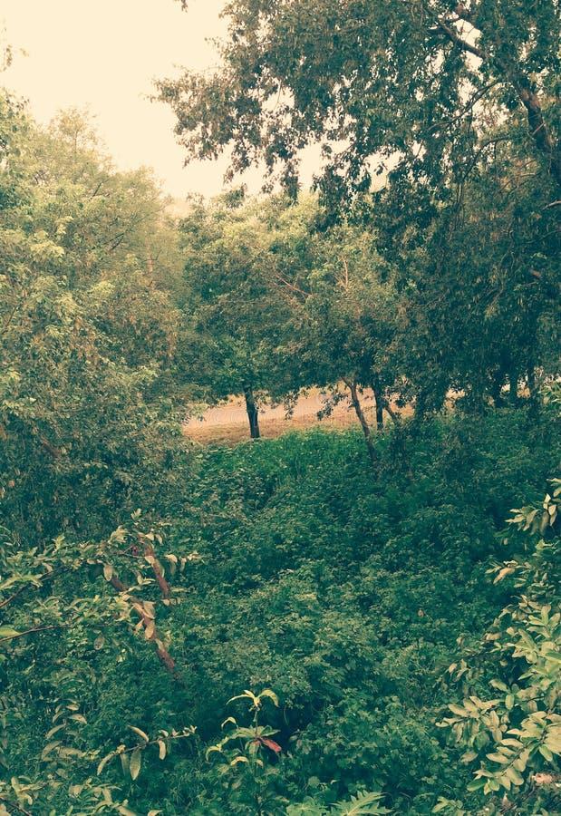 Джунгли Природа Листья Дерево стоковое фото