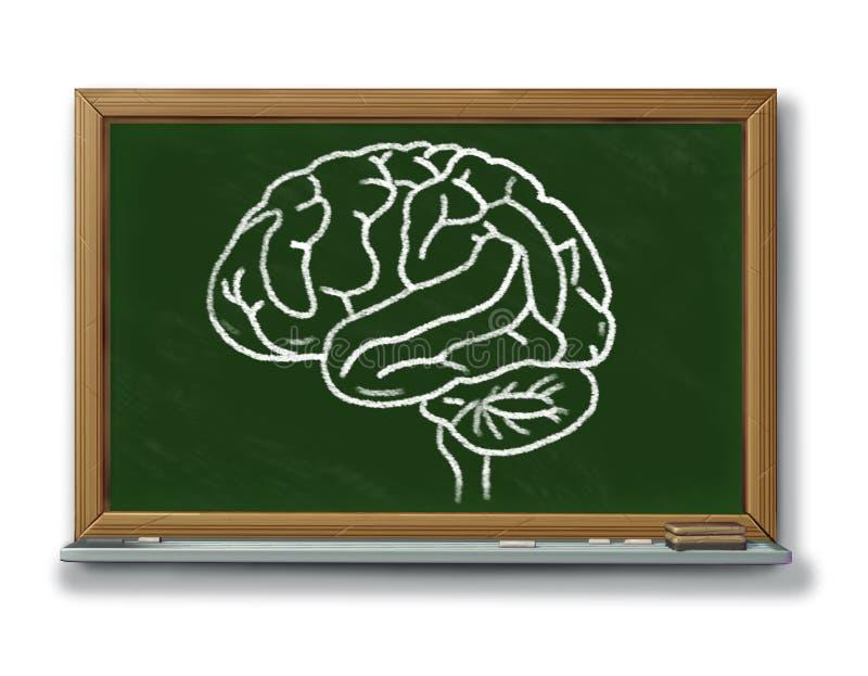диаграмма диаграммы мозга классн классного бесплатная иллюстрация