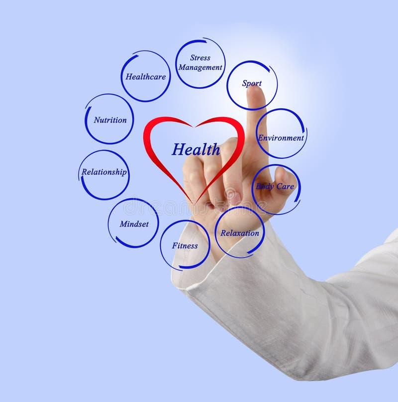 Диаграмма здоровья стоковая фотография rf