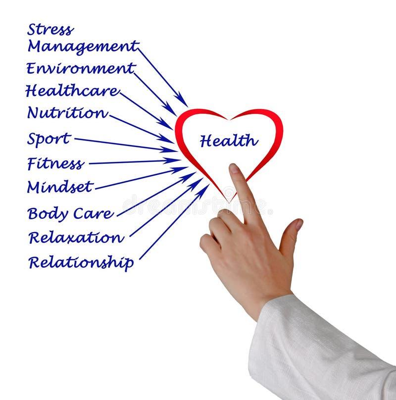 Диаграмма здоровья стоковые изображения rf