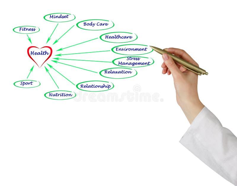 Диаграмма здоровья стоковое изображение rf