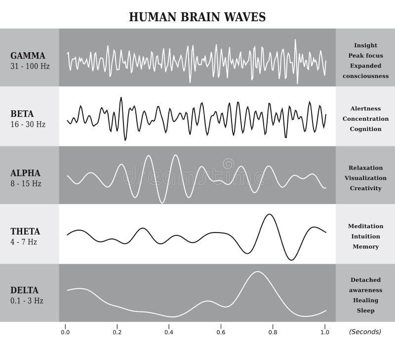 Диаграмма/диаграмма/иллюстрация волн человеческого мозга бесплатная иллюстрация