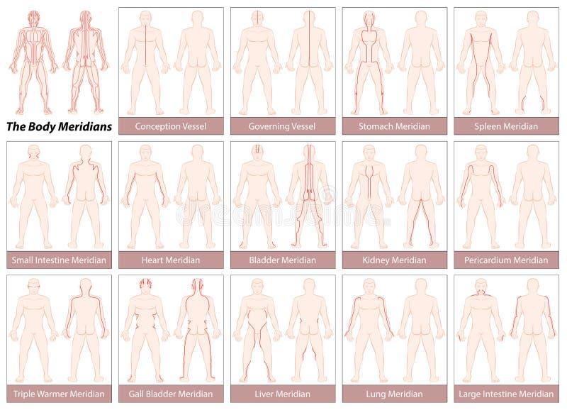 Диаграмма меридианов тела иллюстрация вектора