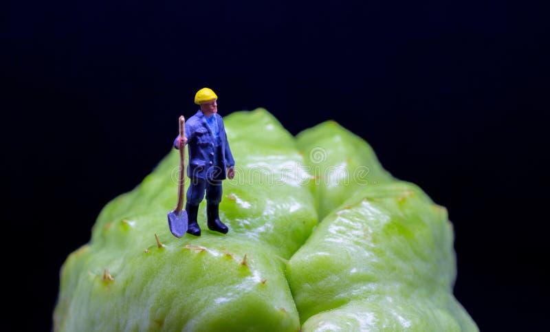 Диаграмма работник на экзотическом плодоовощ Поверхность тропического плодоовощ грубая Figurine работника сада на пересеченной ме стоковые фотографии rf