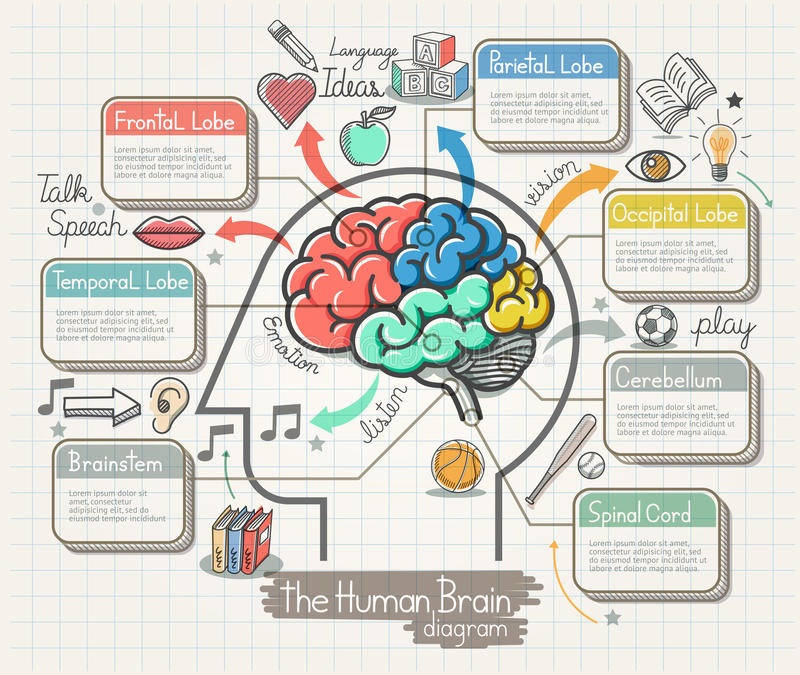 Диаграмма человеческого мозга Doodles установленные значки бесплатная иллюстрация