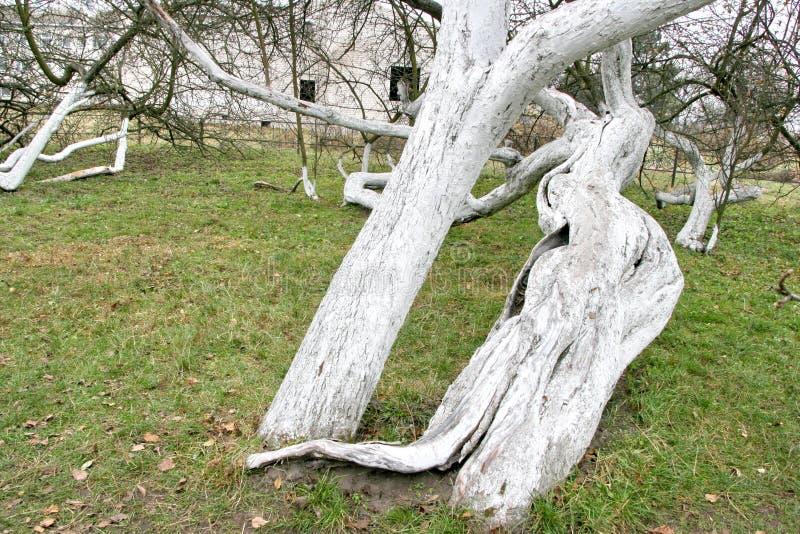 Дивные старые 200 старой лет сад-колонии яблока стоковые фото