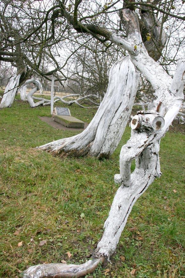 Дивные старые 200 старой лет сад-колонии яблока стоковые изображения