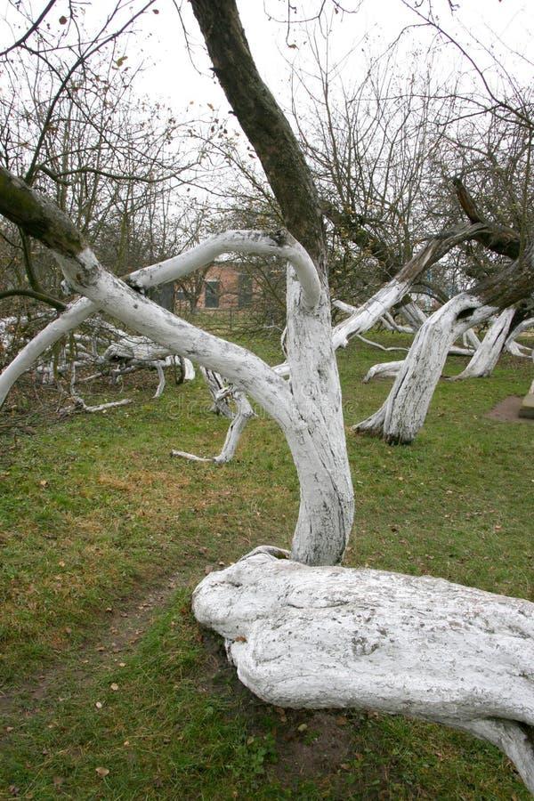 Дивные старые 200 старой лет сад-колонии яблока стоковая фотография