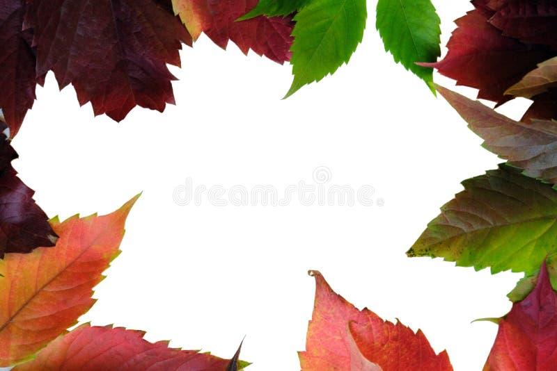 Дизайнерская рамка красочных листьев различных деревьев Осень темы скопируйте космос изолировано стоковые изображения