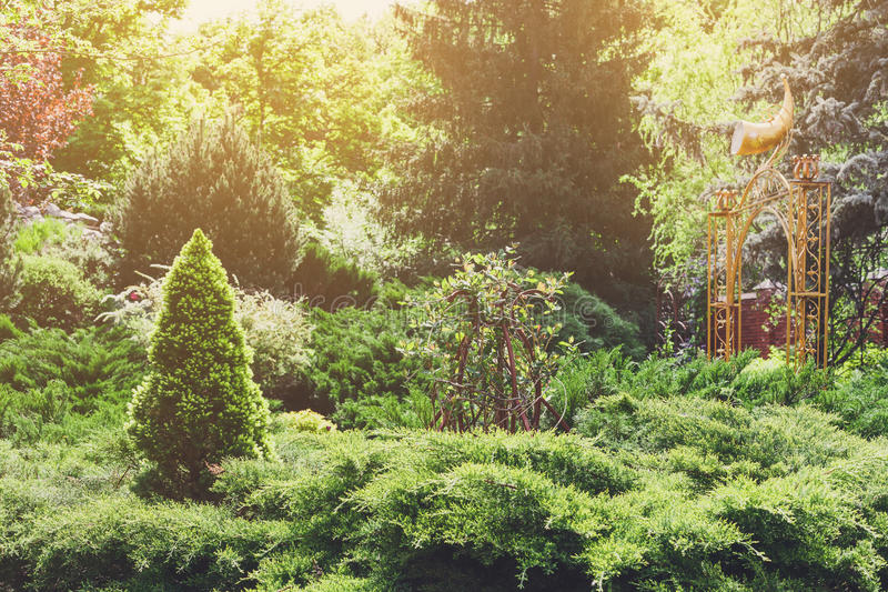 Дизайн ландшафта, вечнозеленые ели и кустарники стоковые изображения