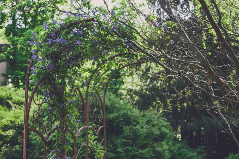 Дизайн ландшафта, вечнозеленые ели и цветки стоковые фотографии rf