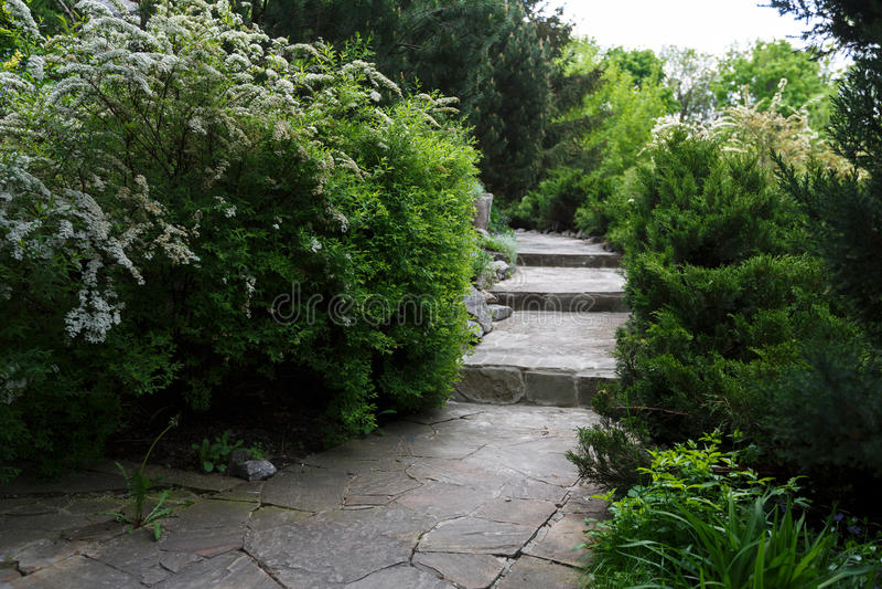 Дизайн ландшафта, вечнозеленые кусты и путь стоковые фотографии rf