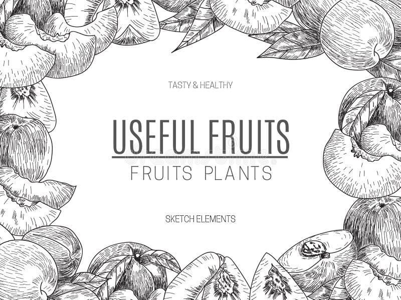 Дизайн вектора персика нарисованного рукой Винтажная иллюстрация стиля эскиза Органическая еда eco Все, отрезанные части половинн бесплатная иллюстрация