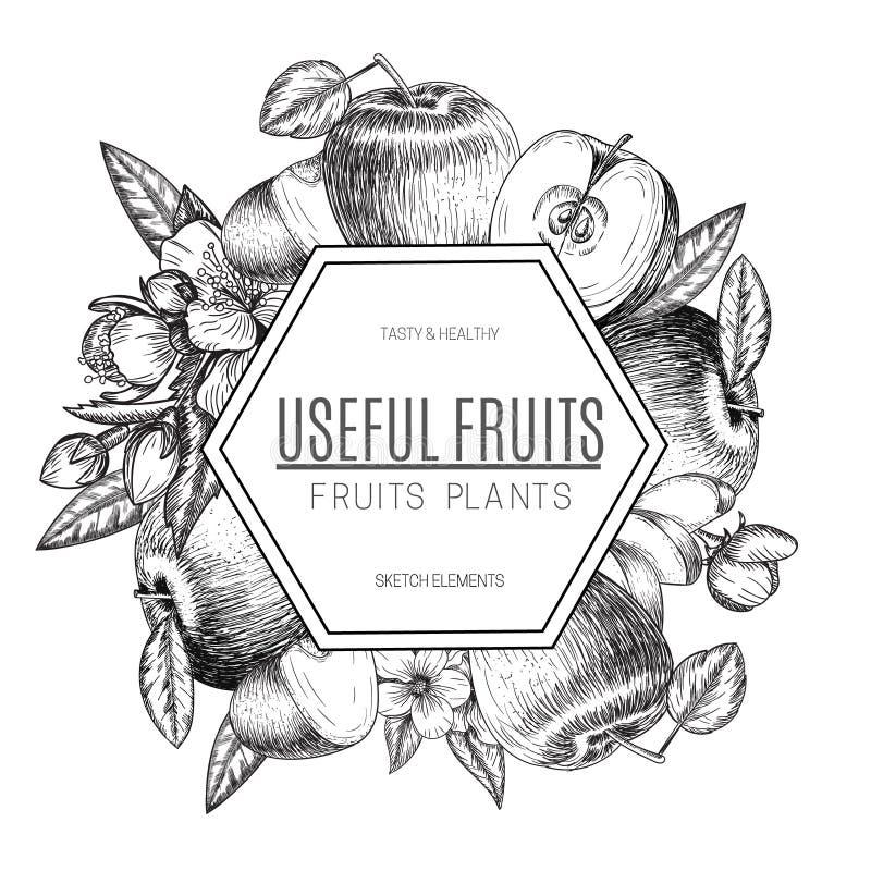 Дизайн вектора яблока нарисованного рукой Винтажная иллюстрация стиля эскиза Органическая еда eco Все, отрезанные части половинны иллюстрация штока