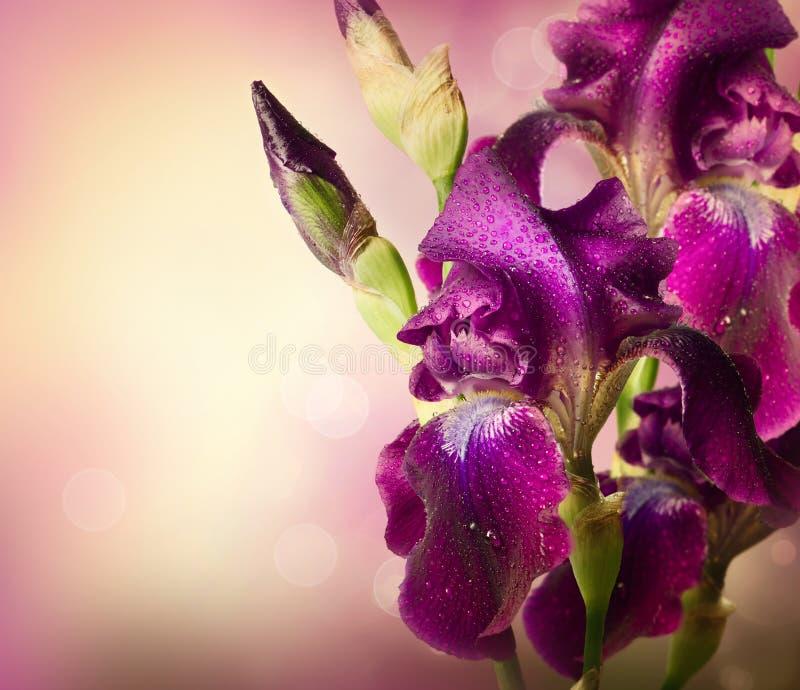 Дизайн искусства цветков радужки стоковая фотография