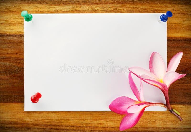 Дизайн карточки, frangipani (plumeria) стоковые изображения rf