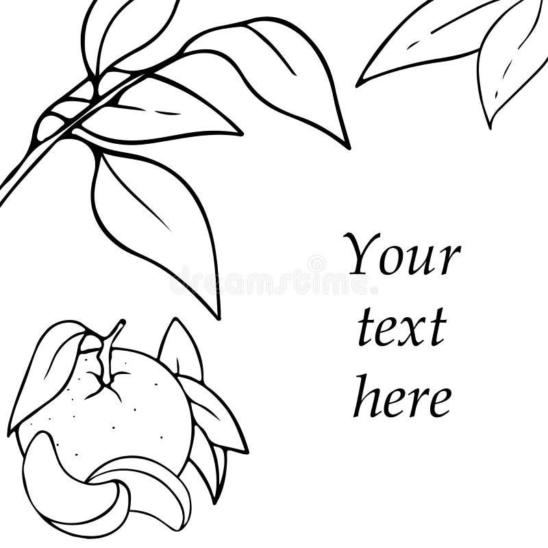 Дизайн карты вектора с мандарином и листьями руки вычерченными законспектированными Эскиз контура с космосом для текста изолирова иллюстрация штока