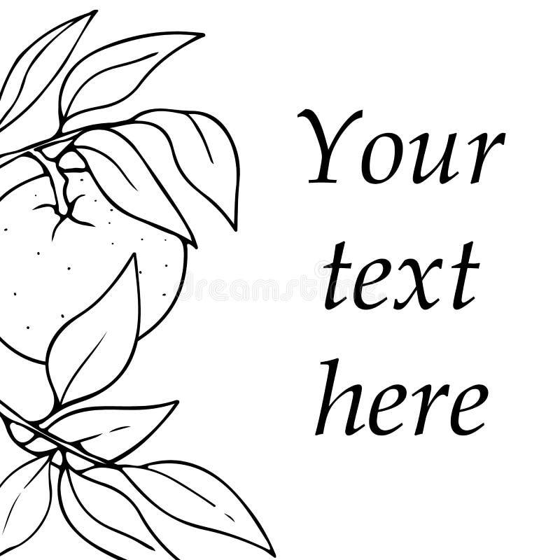 Дизайн карты вектора с мандарином и листьями руки вычерченными законспектированными Эскиз контура с космосом для текста изолирова иллюстрация вектора