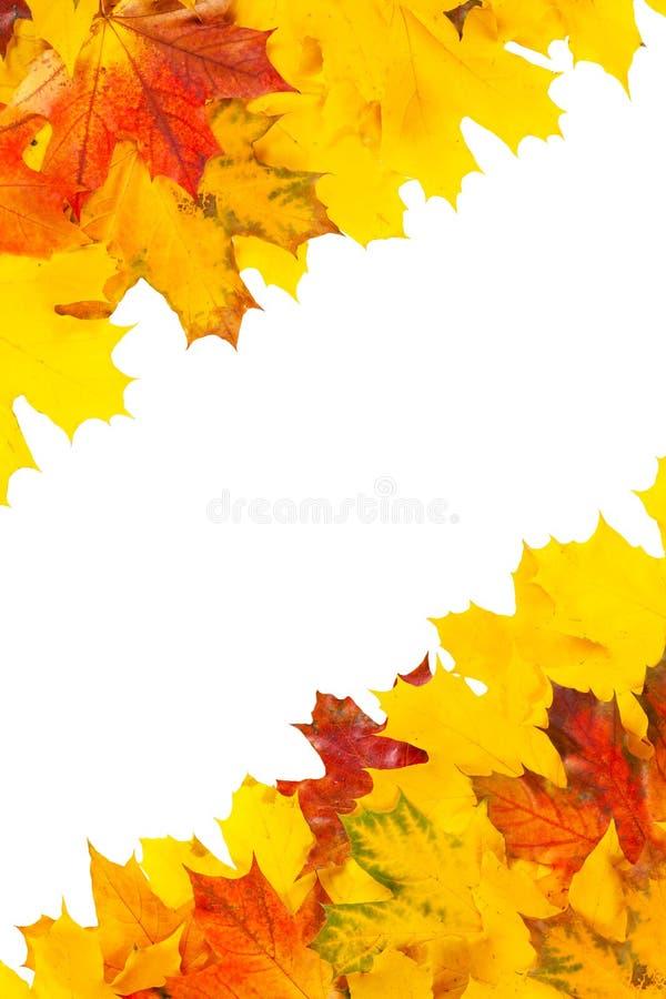 Дизайн кленовых листов стоковое фото rf