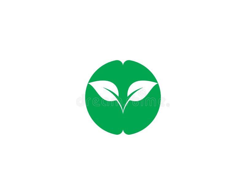 Дизайн логотипа вектора лист дерева иллюстрация штока