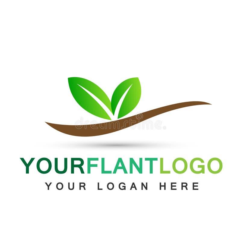 Дизайн логотипа символа значков ботаники дерева лист воды завода на белой предпосылке иллюстрация вектора