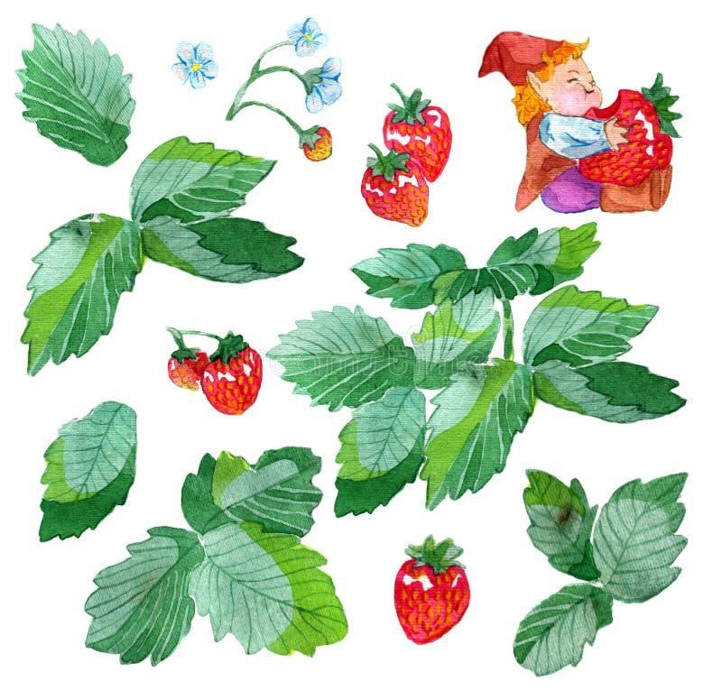 Дизайн установленный при смешной гном есть листья клубники, завода клубники, цветки и ягоды изолированные на белизне иллюстрация штока
