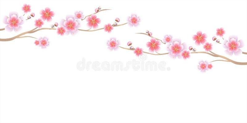 Дизайн цветков Ветви Сакуры изолировали на белой предпосылке цветки Apple-вала Цветение вишни Cmyk EPS 10 вектора бесплатная иллюстрация