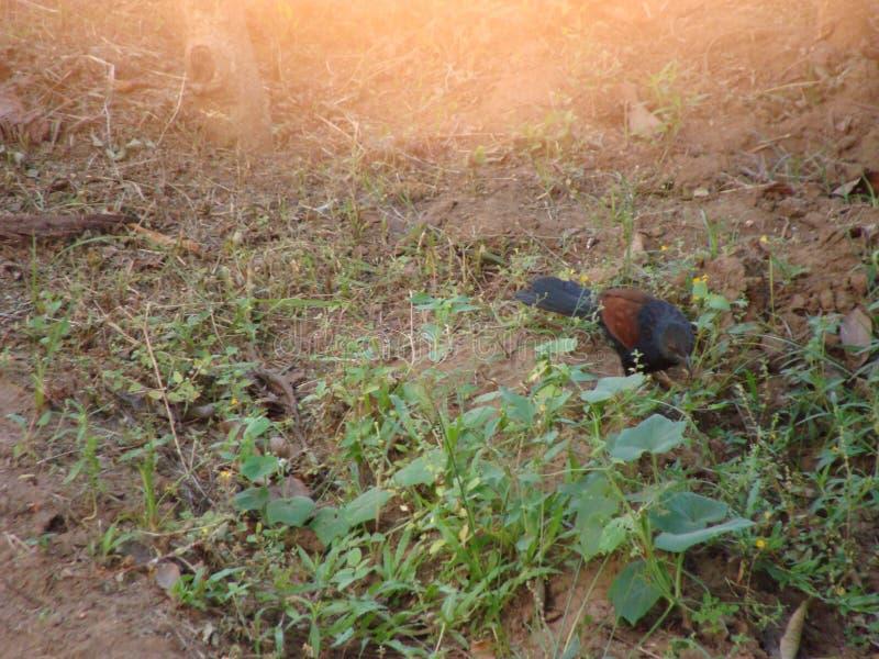 Дикая жизнь Керала стоковое фото