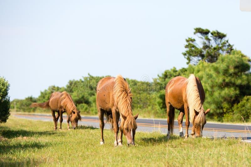 Дикая лошадь пася на стороне травы дороги стоковая фотография