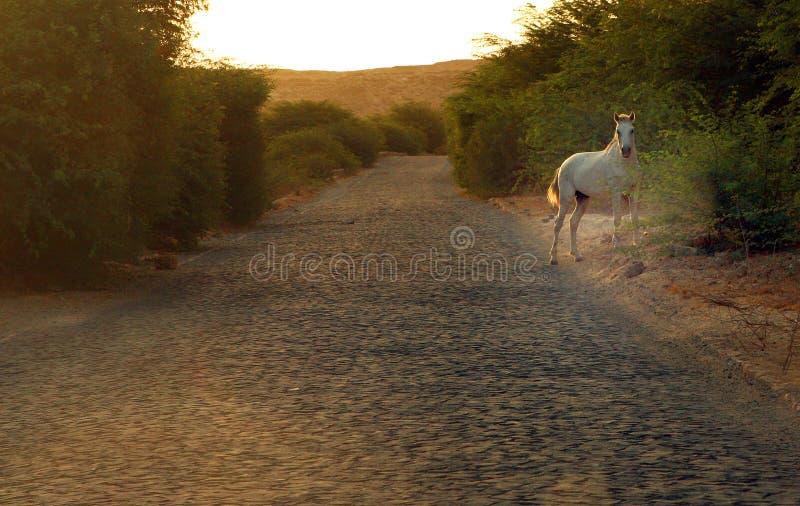 Дикая лошадь на дороге пустыни стоковое фото rf