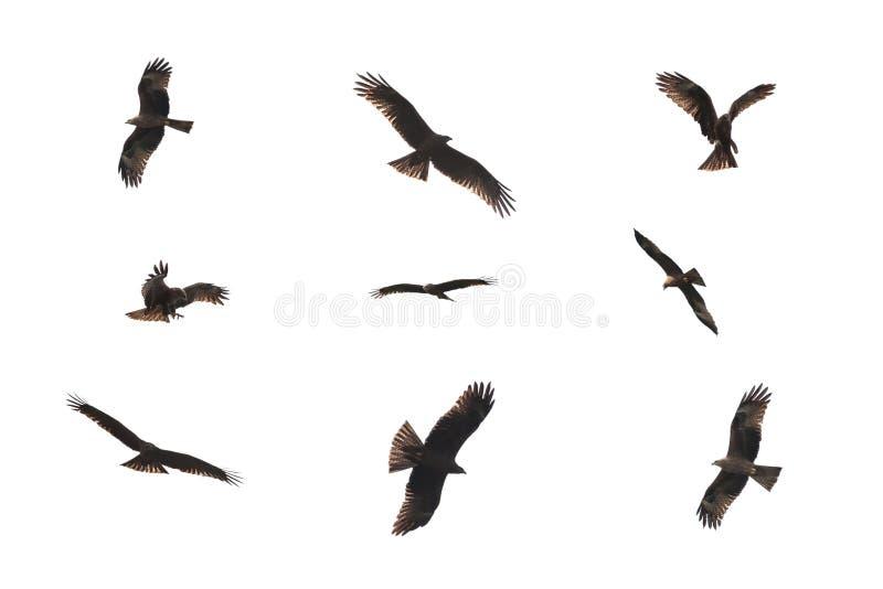 Дикая птица змея изолированная на белизне стоковые фотографии rf