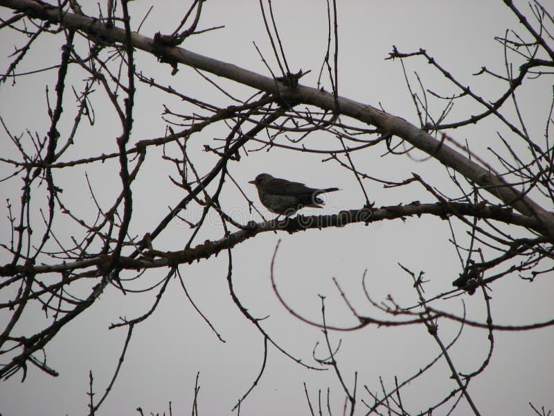 Дикая птица на дереве стоковое фото rf