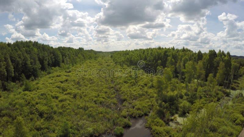 Дикие болота Беларуси топь Торфяники стоковое фото
