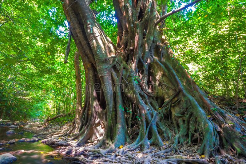 Дикие джунгли на острове Lanta, Krabi, Таиланд стоковые изображения