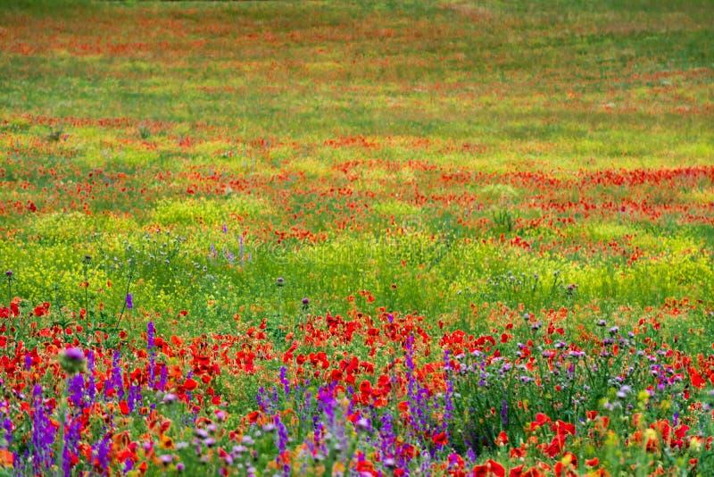 Дикие зеленые поля с цветками стоковые изображения rf