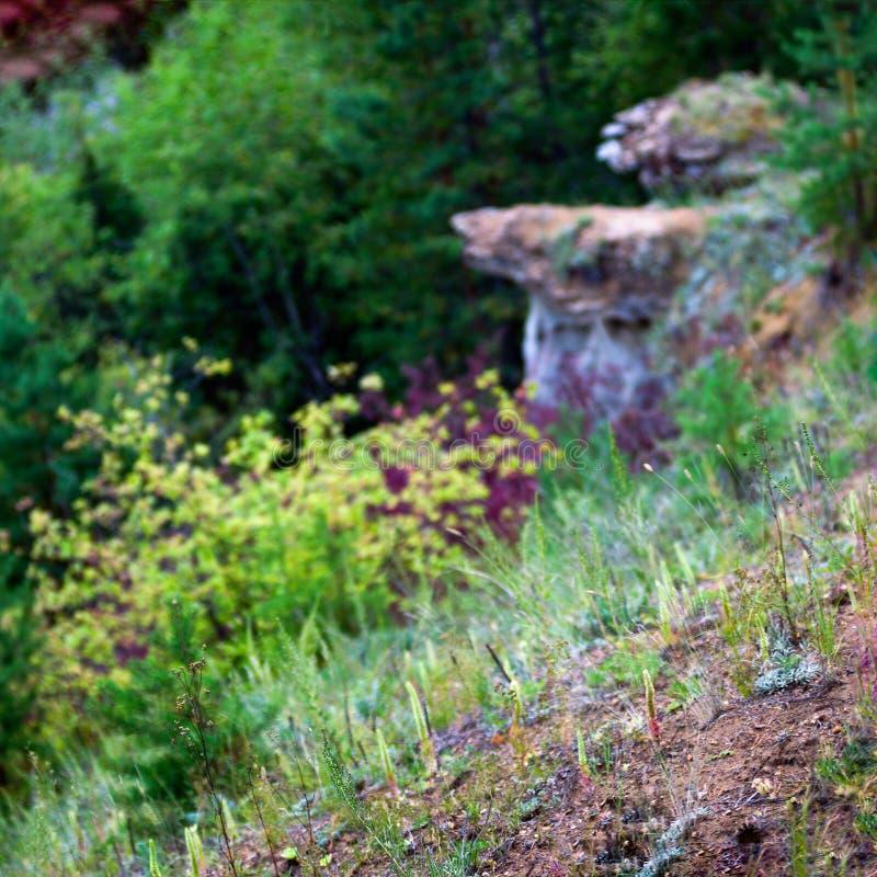 Дикие кактусы и саккуляторы растут в лесу на горном склоне на фоне позиционных аномалий - глиня мушр стоковые изображения
