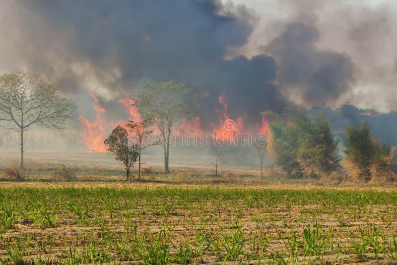 Дикие огни которые распространяют к сахарному тростнику полей фермеров и имеют большие группы дыма стоковое фото rf