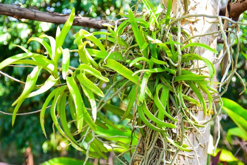 Дикие орхидея и дерево стоковые изображения rf