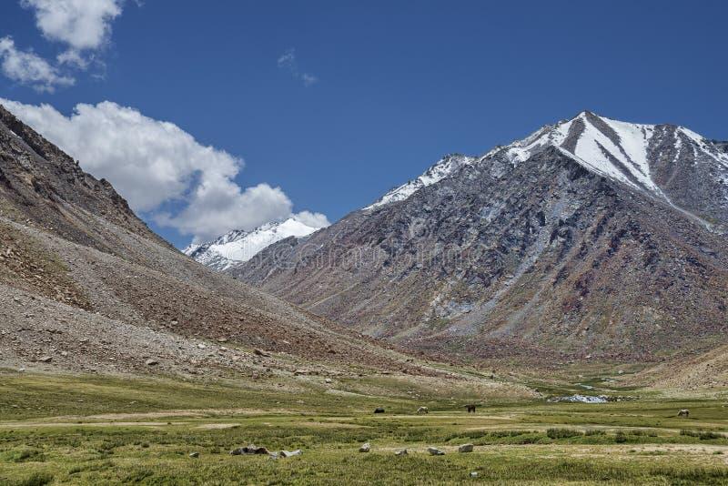 Дикие лошади подавая на долине выгона в высоких горах стоковые фотографии rf