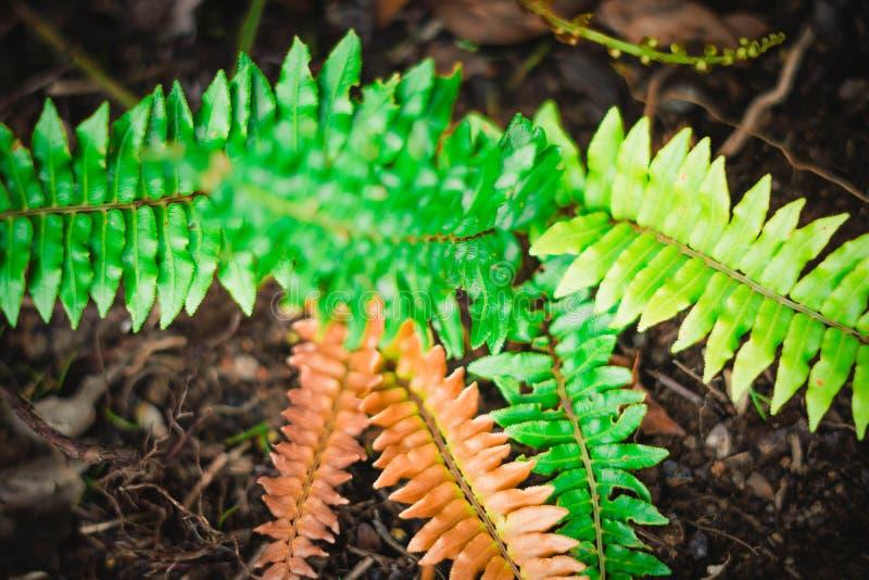 Дикие ферны. Макрос-фотография лесной растительности стоковое фото