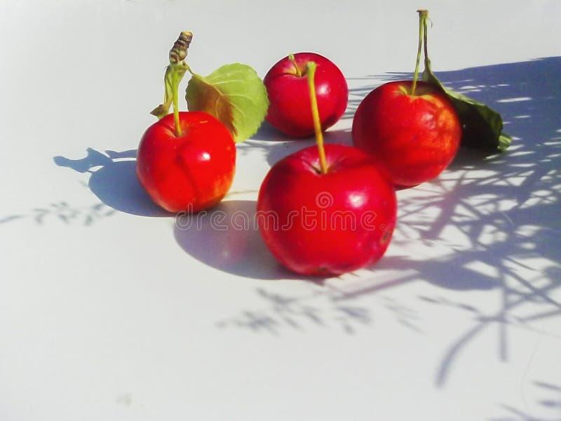 Дикие яблоки рая   дикие яблоки рая стоковая фотография rf