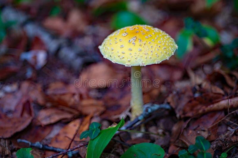 Дикий гриб растя на поле леса глубоко в охраняемой природной территории стоковое изображение